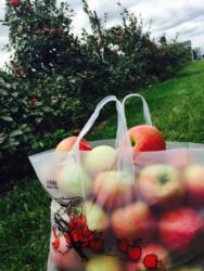 bag & trees