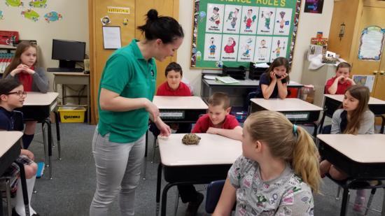gr 4 turtle