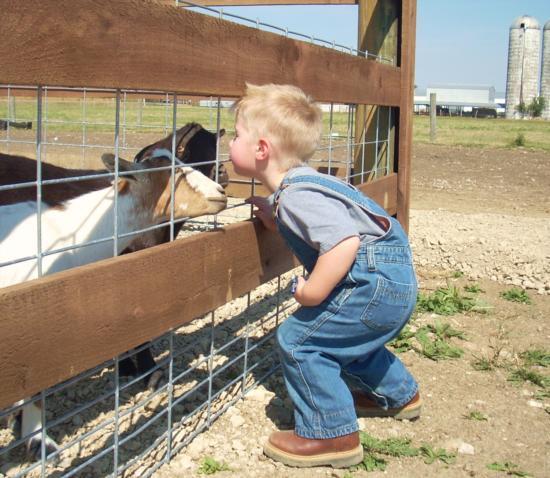 nash goats